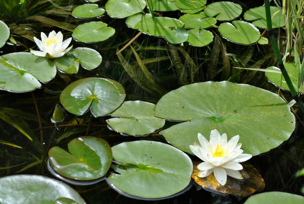 The Pond (3/5)