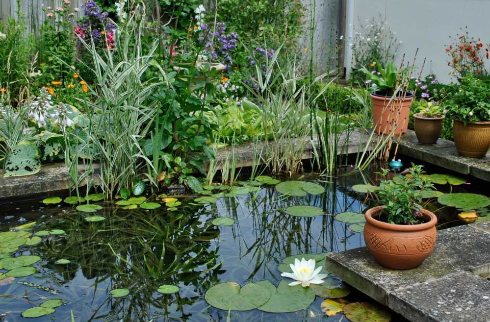 The Pond (1/5)