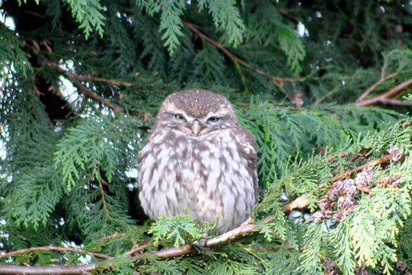 The Wise Old Owl.......scared all the little birds away!