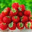 The Framberry - a strawberry that tastes like a raspberry!