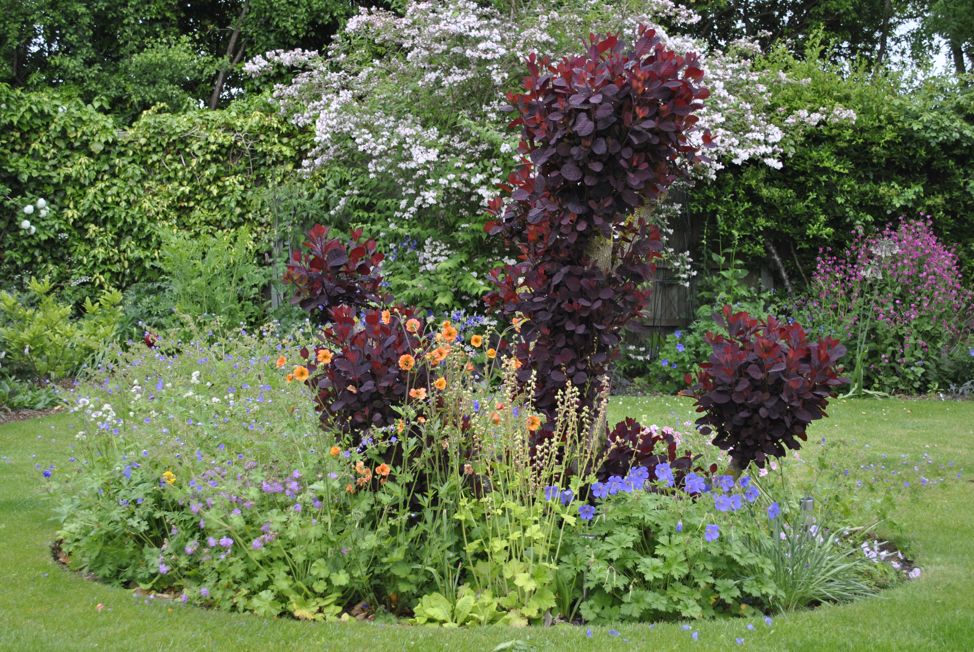 Plant combinations david 39 s garden diary for Planting schemes for small gardens