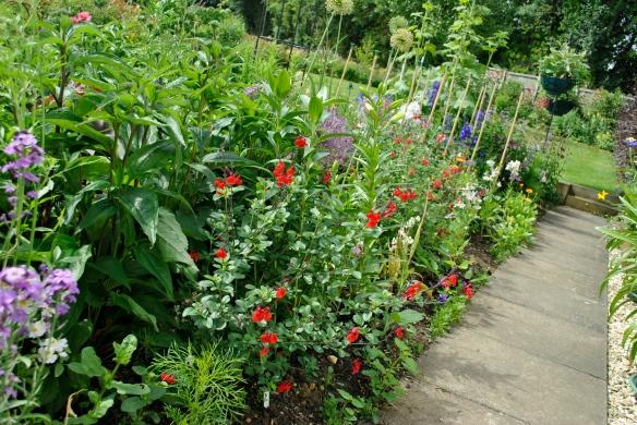 Front border with Salvia greggii 'Royal Bumble'