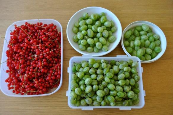 Redcurrants & Gooseberries