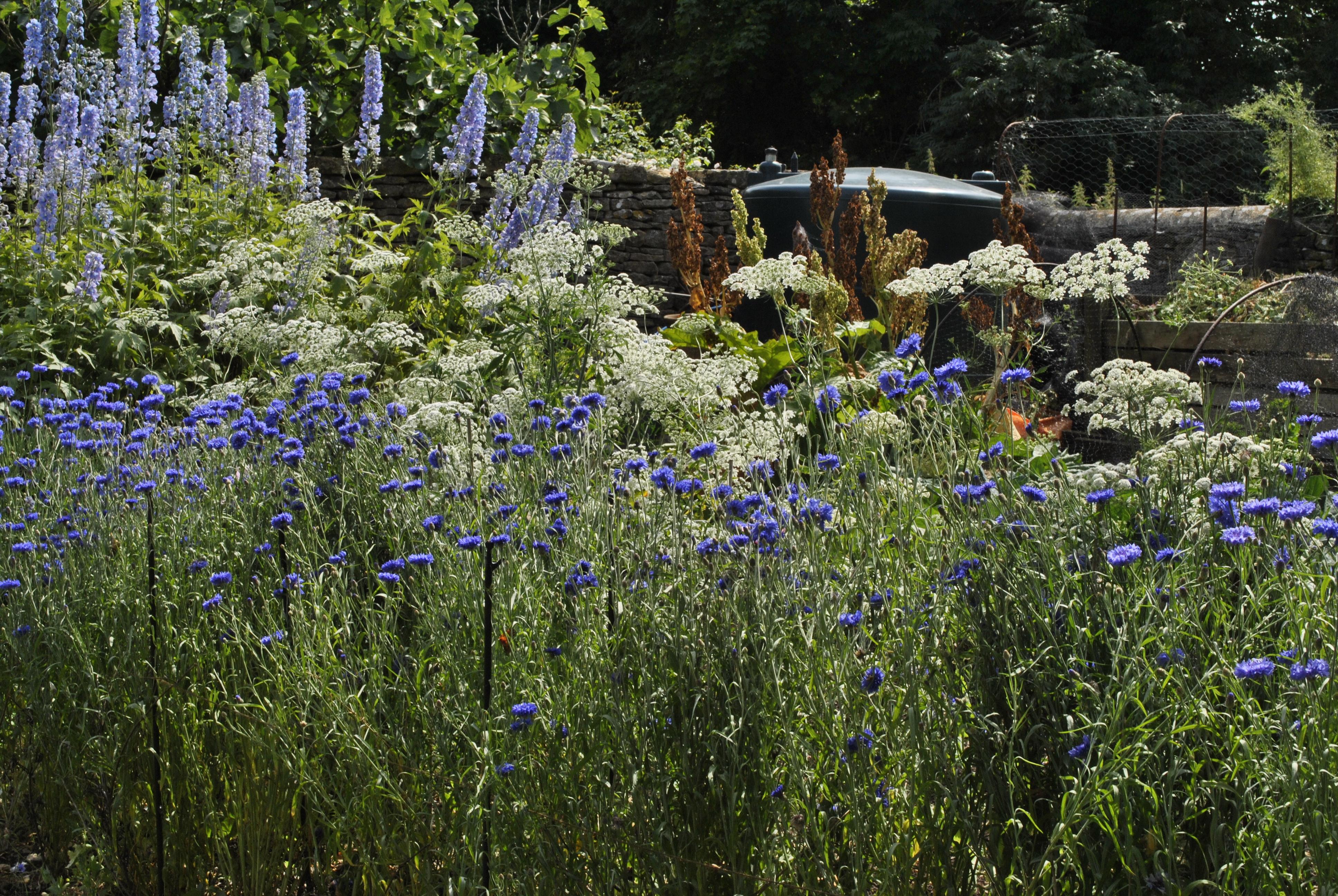 Open gardens david 39 s garden diary for Herbaceous border design examples